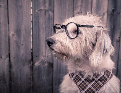 WordPress : tout ce que vous avez toujours voulu savoir